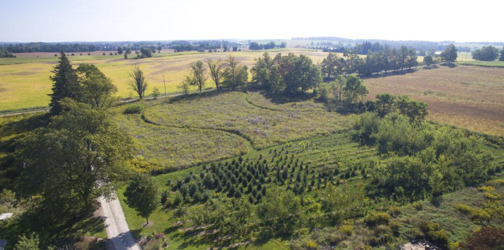 Quiet Nature Meadow 01