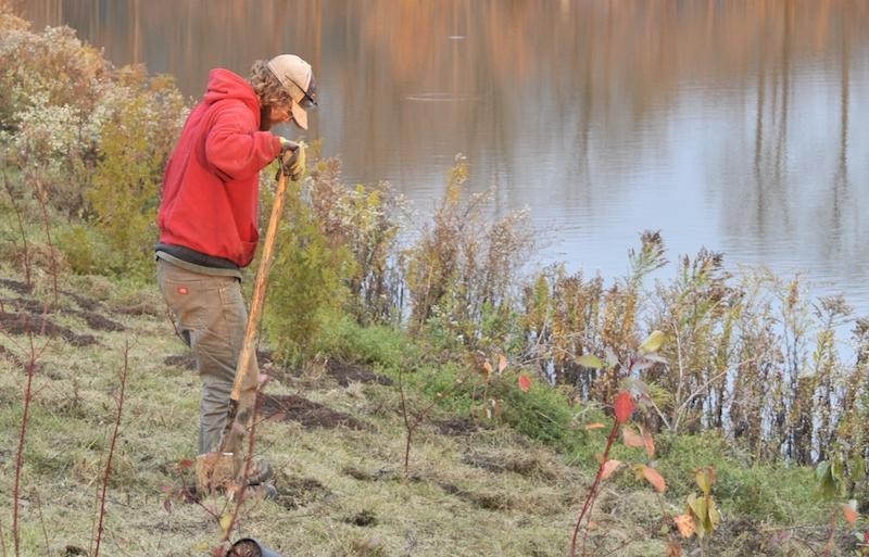 pondside planting