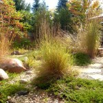 Residential Lawn Alternatives & Drought Tolerant Landscapes