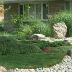 CTV Features Lawn Alternatives from Quiet Nature