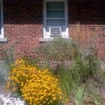 High gas prices and zero emission landscaping