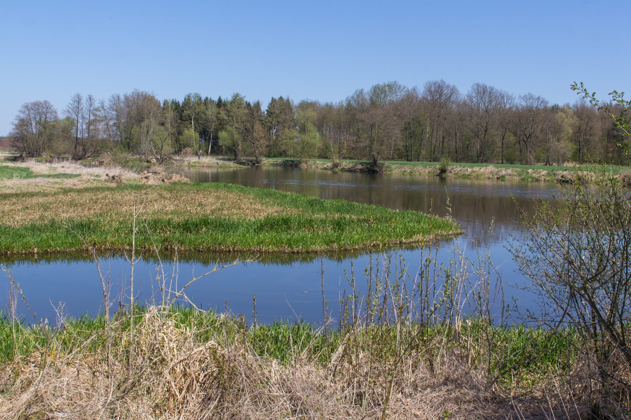 The river naab next to Schwandorf in bavaria in spring