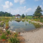 The Beauty of Backyard Recreational Ponds