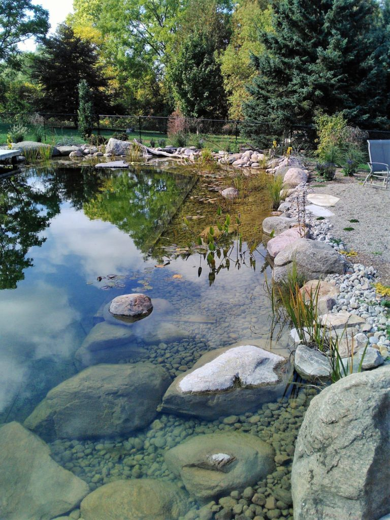 Natural swimming pond regeneration zone