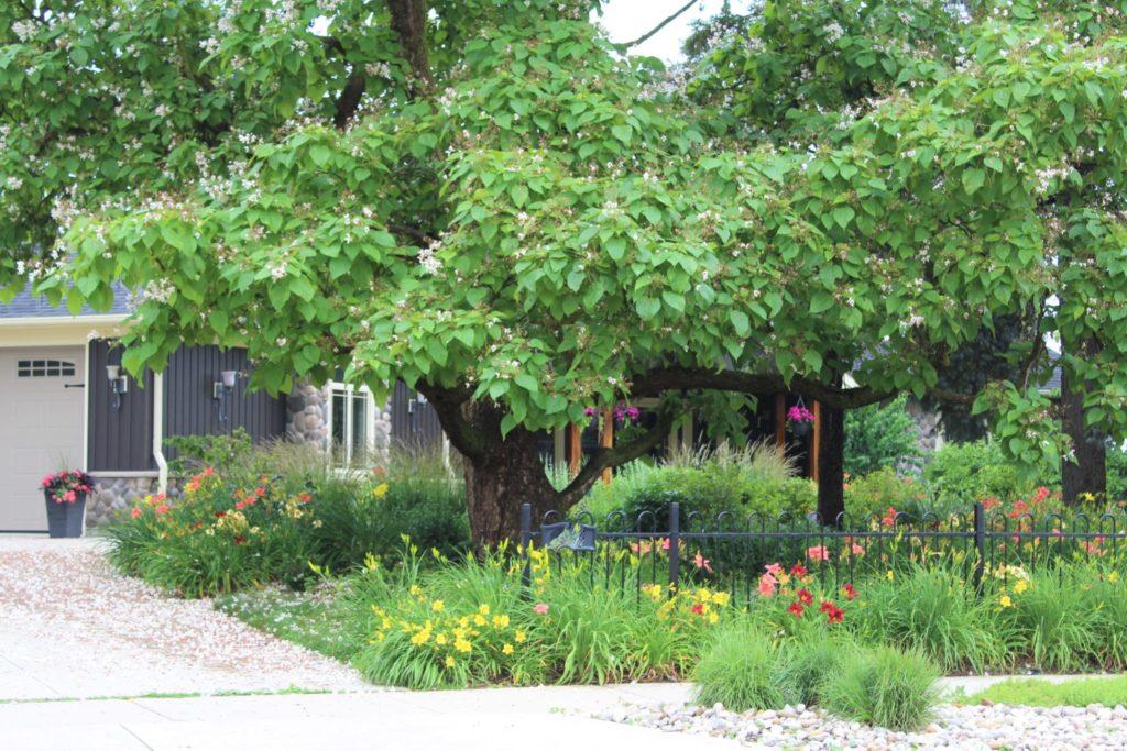 Gardens under catalpa
