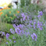 Gardening for Birds, Bees and Wildlife