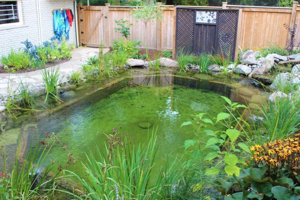 small natural swimming pond