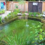 5 Ways to Avoid the Most Common Koi Pond Building Mistakes