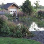Pond vs. Pool – Pros and Cons