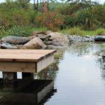 Designing a Backyard Recreation Pond