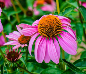 Best Types of Perennials That Will Last for Years quiet nature