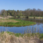 Bringing Life Back to an Old Farm Pond