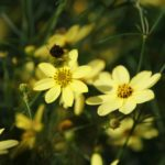 The Best Types of Perennials That Will Last for Years
