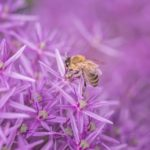 Bee Friendly Landscapes