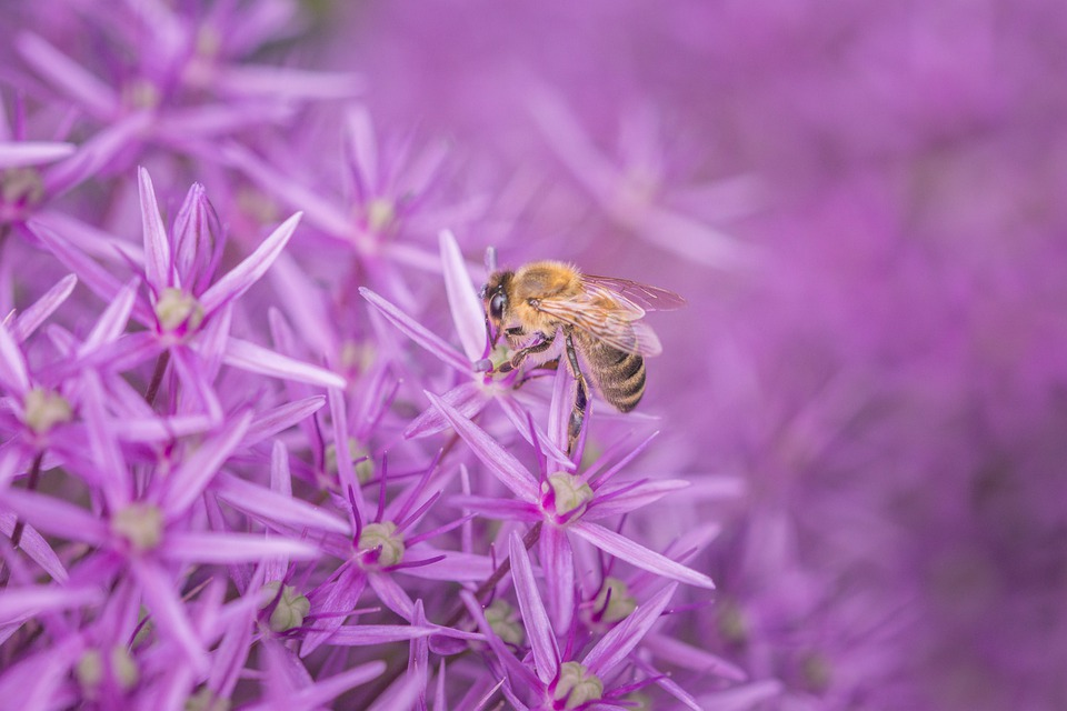 bee friendly landscapes company ayr waterloo